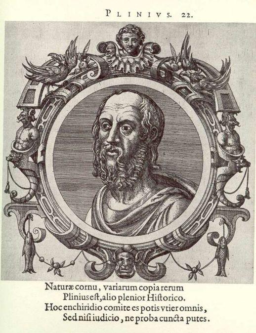 plinius (1).jpg